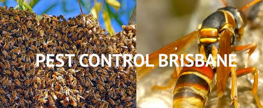 Pest Control Bundamba