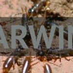 Earwig Pest Control Brisbane
