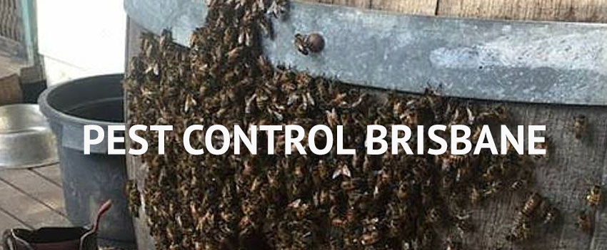 Pest Control Brays Creek
