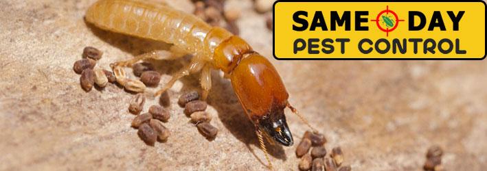 Termites Control Service