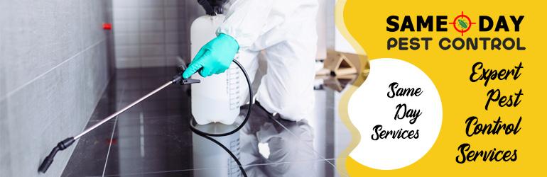Expert Pest Control Services