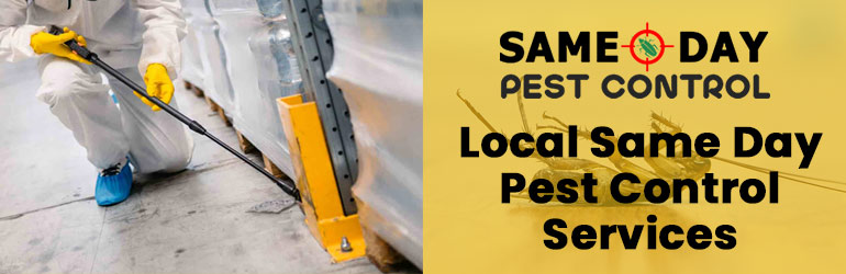 Local Same Day Pest Control