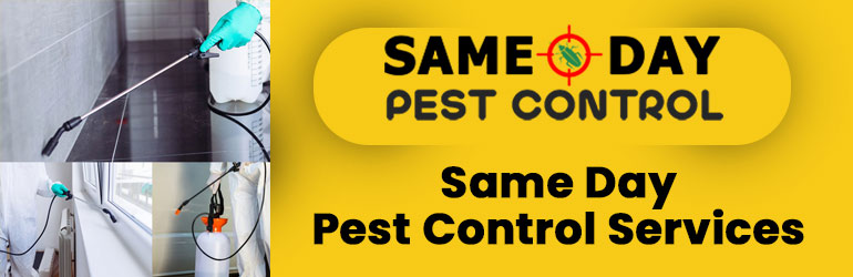 Same Day Pest Control Services Douglas Park