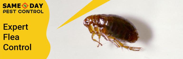 Expert Flea Control