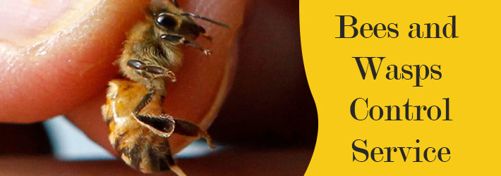 Bees and Wasps Control Service