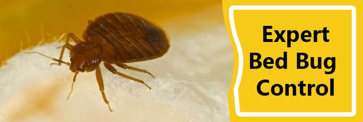 Expert Bed Bug Control