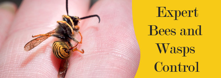 Expert Bees and Wasps Control