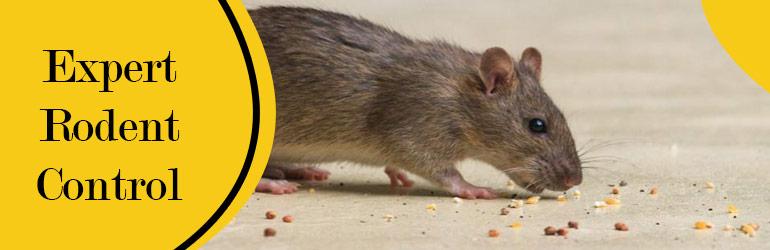 Expert Rodent Control