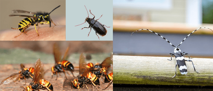 A Superior Method to Kill Pests Which Flies